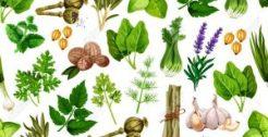 Condimentos, Hierbas y Especias